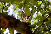 """Daily life Diary of a cat called """"Speedy"""" living on the Czech country side close to Prague."""