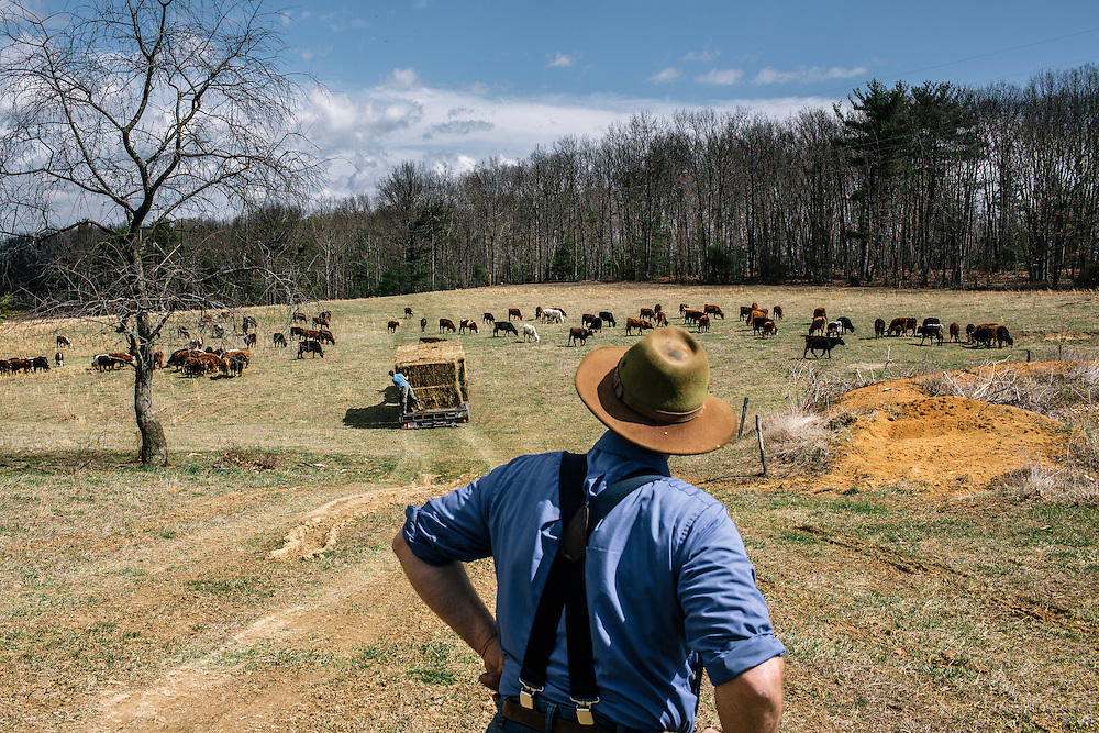 SWOOPE, VA - MARCH 26 Pasture-based farmer Joel Salatin watches hay being put down for cows at Polyface Farms in Swoope, Va. on March 26, 2015. Salatin is one of the heroes of the sustainable-food movement, and he appeals to both left- and right-wing audiences.  (Photo by Greg Kahn/GRAIN for The Washington Post)