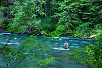 Man fly fishing the McKenzie River, Oregon.
