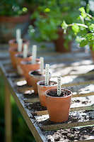 Terracotta flowerpots with labels on workbench in potting shed