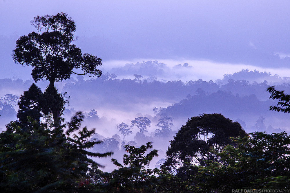 Fog rising from the forest of the Danun Valley Conservation Area (DVCA)