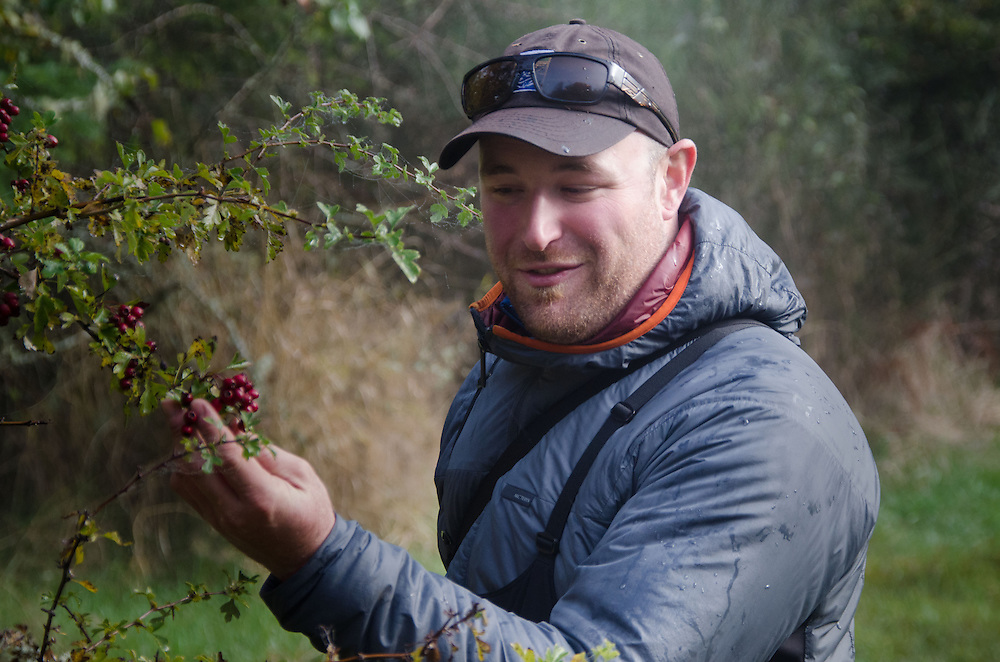 SV Maple Leaf First Mate Brandon Harvey shows off Madrona Tree (Arbutus menziesii) Berries, Prevost Island, Gulf Islands National Park Reserve, British Columbia, Canada