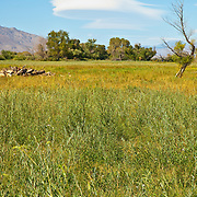 Landscape with eastern sierra mountains in background.Bishop. California, USA.