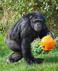 OCT 29 2013 Halloween at the zoo