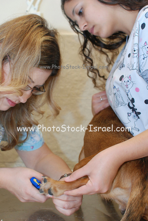 A female vet and aid clip a dog's nails