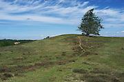 Picture shows Sk&aring;neleden Trail, Sweden. 10th June 2013.<br /> <br /> Credit should read: Picture by Mark Larner