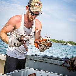 "Ryan Schultz, crew on the lobster boat, ""Overkill"", unloading lobsters at the Friendship Lobster Co-op in Friendship, Maine."