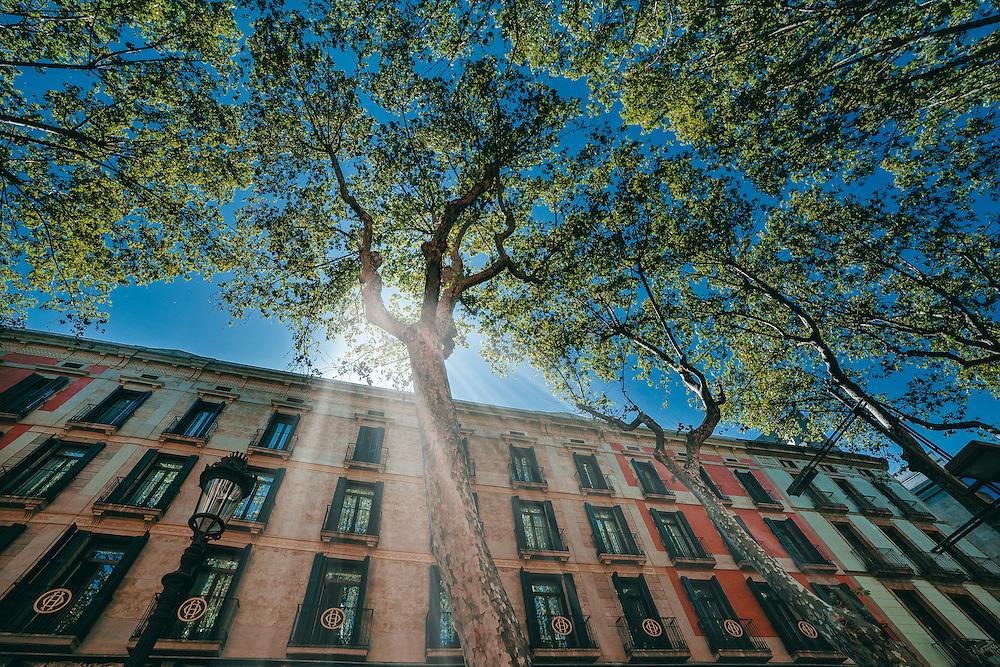 Photo by Liliana Ja&eacute;n Russo &copy;.<br /> www.coleccionalosublime.com