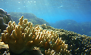corals at Tuvalu island in the pacific ocean