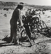 Hopi man hoeing corn planted in widely-spaced bunches, a technique which conserves water, escapes frost and protects young plants from spring wind, photograph by Adam Clark Vroman, 1901, courtesy of the Los Angeles County Museum of Natural History, in the Anasazi Heritage Center, an archaeological museum of Native American pueblo and hunter-gatherer cultures, Dolores, Colorado, USA. The Hopi grow over 300 varieties of corn. Picture by Manuel Cohen