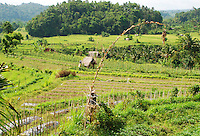 Typical east Bali landscape with a mixture of paddy fields and forest.