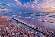 Pebbles and shells on sandy shore of Lake Ontario<br /> Sandbanks Provincial Park<br /> Ontario<br /> Canada