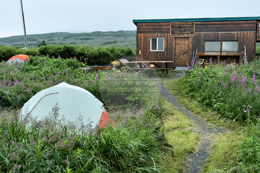 Tents set among wildflowers near the cookhouse inside the campground at the McNeil River State Game Sanctuary on the Kenai Peninsula, Alaska. The remote site is accessed only with a special permit and is the world's largest seasonal population of brown bears in their natural environment.