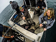 Dr. Joanne Edney joins in with her brother and guests Halibut Fishing.