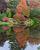 Autumn at the Asticou Azalea Garden