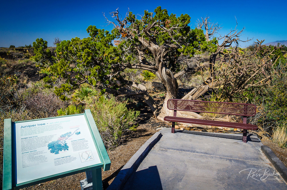 Malpais Nature Trail, Valley of Fires Natural Recreation Area, Carrizozo, New Mexico USA