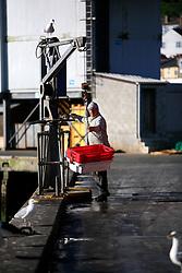 UK CORNWALL NEWLYN 10JUN08 - xxx at Newlyn harbour in Cornwall, western England.....jre/Photo by Jiri Rezac / WWF UK....© Jiri Rezac 2008....Contact: +44 (0) 7050 110 417..Mobile:  +44 (0) 7801 337 683..Office:  +44 (0) 20 8968 9635....Email:   jiri@jirirezac.com..Web:    www.jirirezac.com....© All images Jiri Rezac 2008 - All rights reserved.