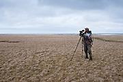 Waterfowl biologist, Howie Singer reading bands, Black Brant; Branta bernicla nigricans, Tutakoke River research camp, Yukon Delta NWR, Alaska