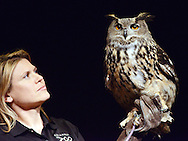"HILLTOWN, PA -  MARCH 7: An assistant holds an owl as Jack Hanna (not shown) takes the stage at Calvary Church for his ""Into the Wild Live"" presentation March 7, 2014 in Hilltown, Pennsylvania.  Hanna is known for his many appearances bringing animals to the late-night talk show circuit. The event is a fundraiser for children and adults with intellectual and developmental disabilities. (Photo by William Thomas Cain/Cain Images)"