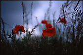 Poppy's | Colour