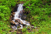 Stream in old growth inalnd temperate rain forest <br /> Revelstoke National Park<br /> British Columbia<br /> Canada