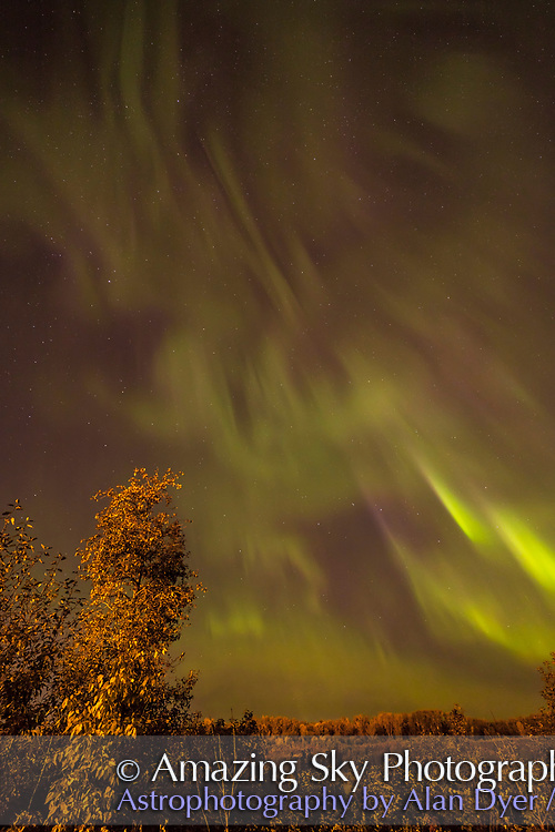 The Northern Lights in a decent display on September 15, 2017, from River Road north of Fort Saskatchewan amid the petrochemical plants lighting the foreground, and overlooking the North Saskatchewan River. The aurora here reaches to the zenith in a post-substorm phase of flickering or pulsating.<br /> <br /> The Big Dipper is right of centre. <br /> <br /> I shot this with the Canon 6D MkII at ISO 800 and 14mm Rokinon SP at f/2.5, for 4 seconds.