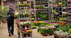 © Licensed to London News Pictures. 15/03/2012. London, UK. A porter moves plants through the market. The Mothering Sunday sales rush is on for flower growers, suppliers, florists and retailers amongst the Flowers at the New Covent Garden Flower Market on March 15th 2012 in London, England. New Covent Garden Flower Market is London's premier wholesale market stocking the widest range of flowers, plants and foliage in the UK. The run up to Mothers' Day is crucial in the flower selling calendar as Mothers' Day sales are condensed into about four days making the market very busy. Traditionally, Mothering Sunday was a day when children, mainly daughters, who had gone to work as domestic servants, were given a day off to visit their mother and family. Today, Mother's Day is a time when children give flowers and cards to their mothers, and generally pamper them..  Photo credit : Stephen SImpson/LNP