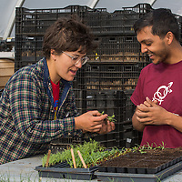 Amherst College student interns at Book & Plow Farm, Amherst, MA