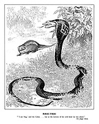 "Rikki-Tikki. ""'I am Nag', said the Cobra ... but at the bottom of his cold heart he was afraid."" The Jungle Book"