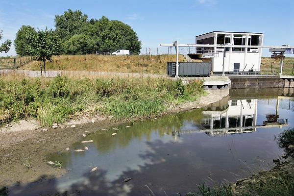 Nederland, the netherlands, Brummen, 6-8-2018De Oekensebeek is drooggevallen vanwege de aanhoudende droogte . Bij het stuwtje liggen dode vissen die door zuurstofgebrek hun dood vonden .Foto: Flip Franssen