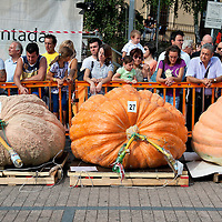 BRESCIA, ITALY - SEPTEMBER 12: Three of the largest giant pumpkins are lined up at this year competition at  Sale Marasino organised by the Club Maspaino on September 12, 2010 in Brescia, Italy.  Cutrupi Stefano of Radda in Chianti, won  this year Italian National Competition with his pumpkin weighing  507 Kg.