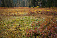 Takh Takh Meadow in autumn, Gifford Pinchot National Forest, Cascade Mountain Range, Washington, USA