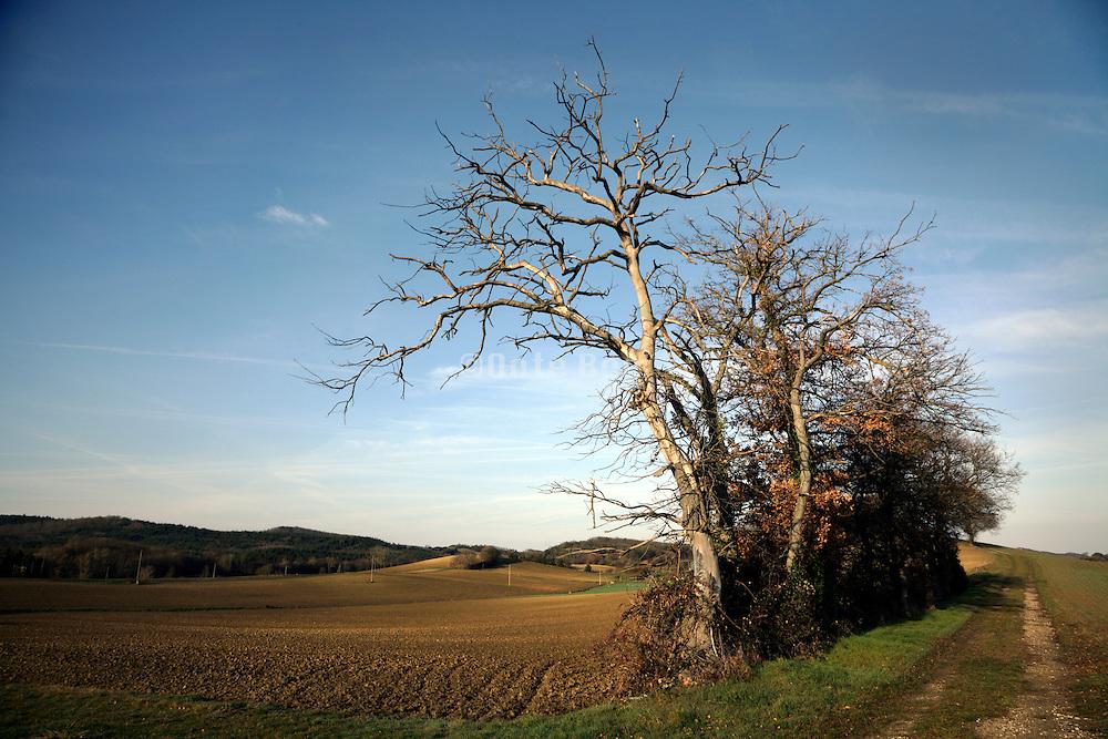 dead trees in rural landscape France
