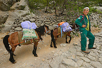 Park ranger with pack mules on the main trail, Paklenica National Park, Velebit Nature Park, Rewilding Europe rewilding area, Velebit  mountains, Croatia