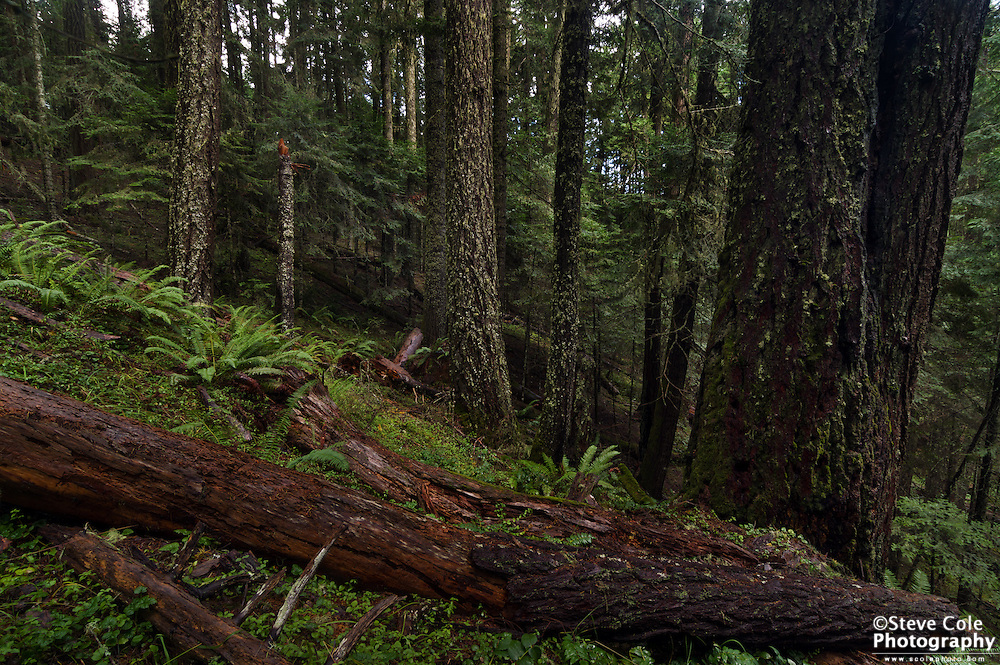 Ragu Timber Sale Unit E #1 - Berry Creek