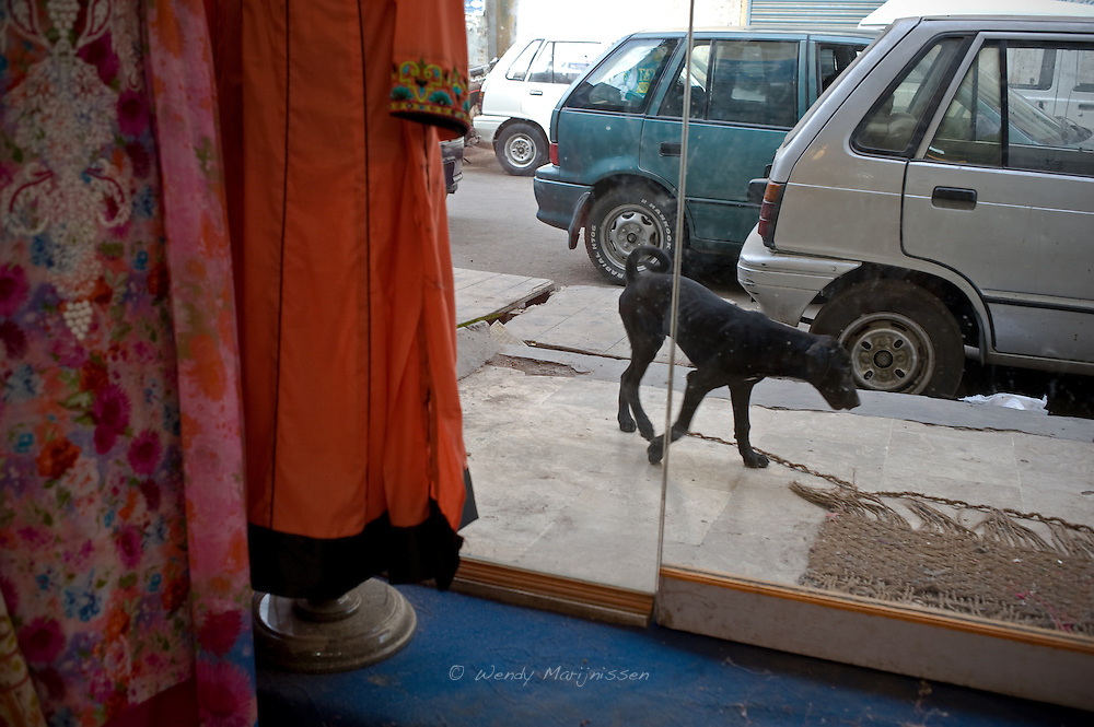 A stray dog walks past a clothing store in the old city center of Karachi. Pakistan, 2011