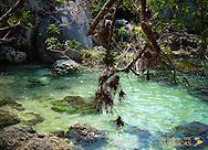 Garden Eden in Brazil