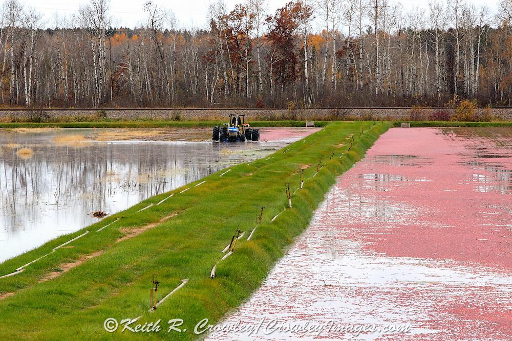 Cranberry harvesting operations at Gardner Cranberry LLC, in Gordon, Wisconsin