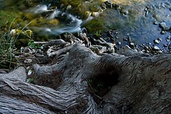Stock photo of a cypress tree over the Frio River in the Texas Hill Country