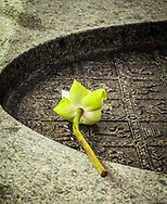 Lotus Flower Offering on a table in a temple, Bangkok, Thailand