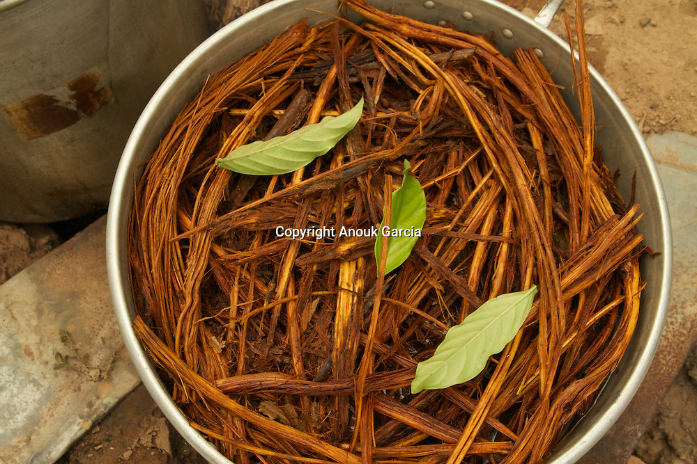 "préparation de du ""nixi pae"", l'ayahuasca  