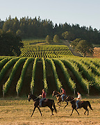 Equestrian Wine Tours, horseback riding through vineyards of the Dundee Hills, Willamette Valley, Oregon