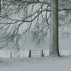 winter in wijdemeren