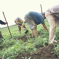 Agricultores labrando la tierra, Yaracuy, Venezuela