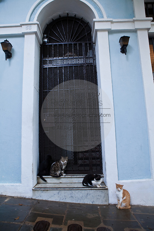 Feral cats gather in a doorway of Old San Juan, Puerto Rico