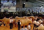 08/10/05 - COURNON - PUY DE DOME - FRANCE - Sommet de l Elevage 2005 a la Grande Halle de Cournon. Concours Special CHAROLAIS - Photo Jerome CHABANNE
