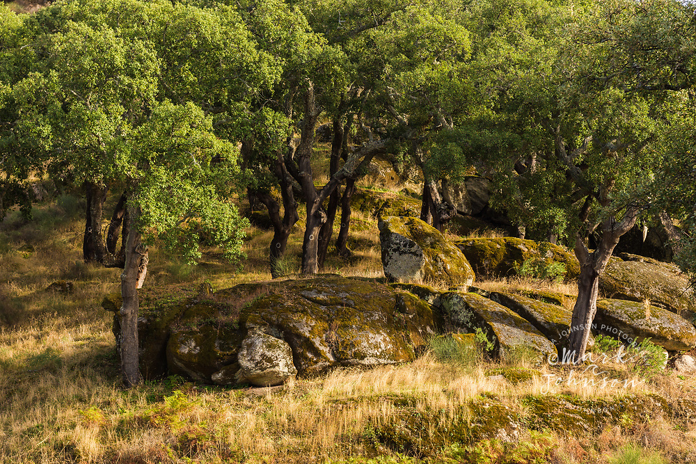 The rocky countryside & cork tree grove outside of Monsanto, Portugal