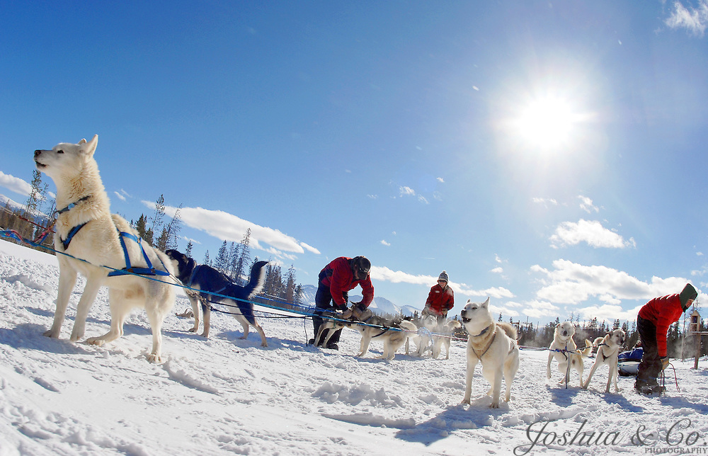 dog sled rides of winter park - 1000×644