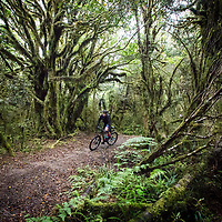Timber Trail NZ