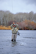 08346-C. A fly fisherman sets the hook on a trout during a late-autumn day on the lower Henry's Fork, Idaho.
